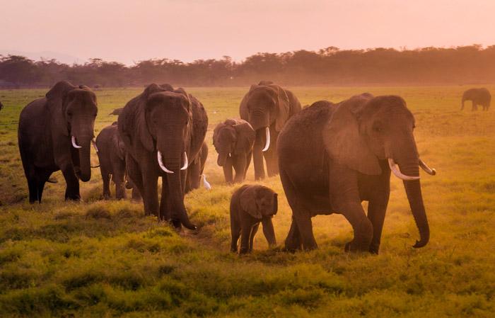 Elephants-sunset