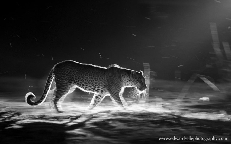 Leopard-Night-Drive-Ed-Selfe
