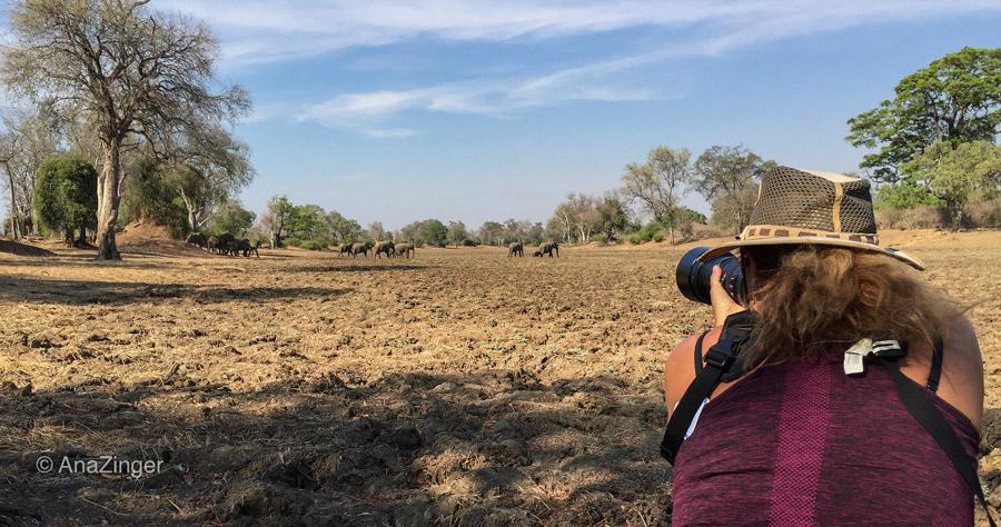Luangwa-Photo-Safari