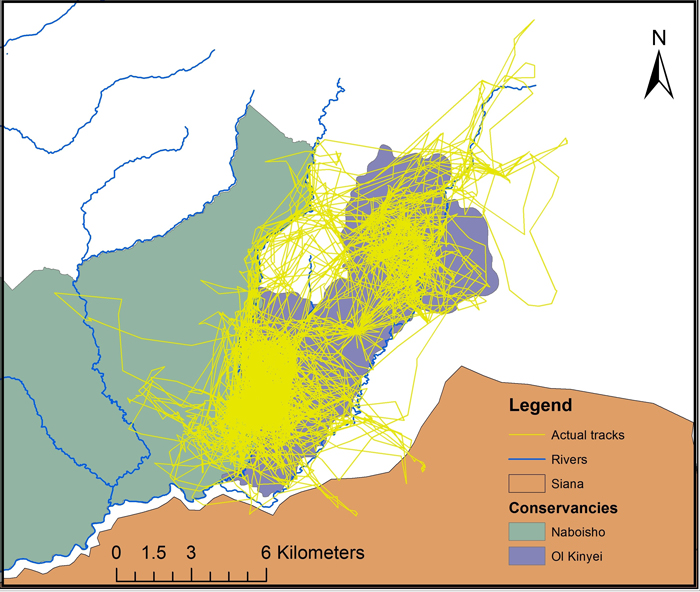 Map showing Nenkume's actual tracks – mainly in the Conservancies – over a 2 year period