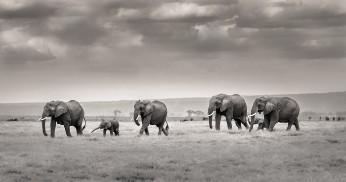 Ol-Tukai-Elephants