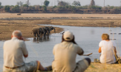 Photograph-Elephants-South-Luangwa