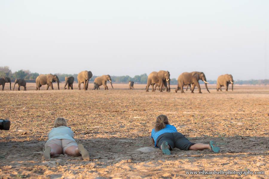 Phtographing-elephants-ground-level-south-luangwa