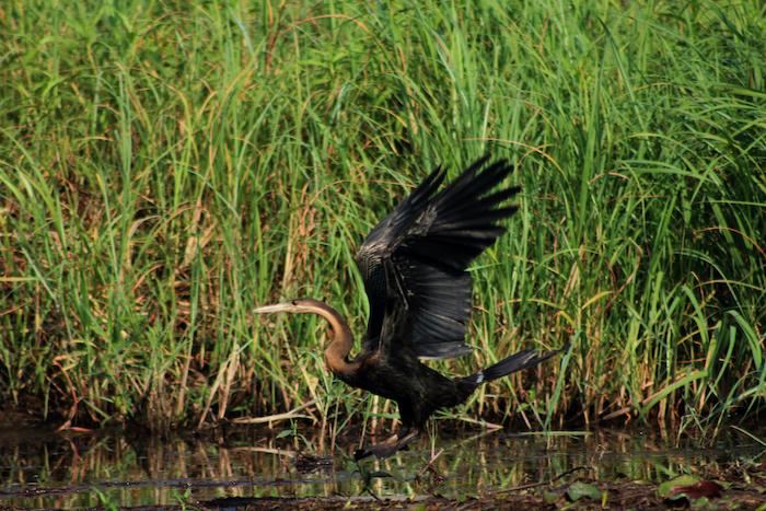bird-in-botswana