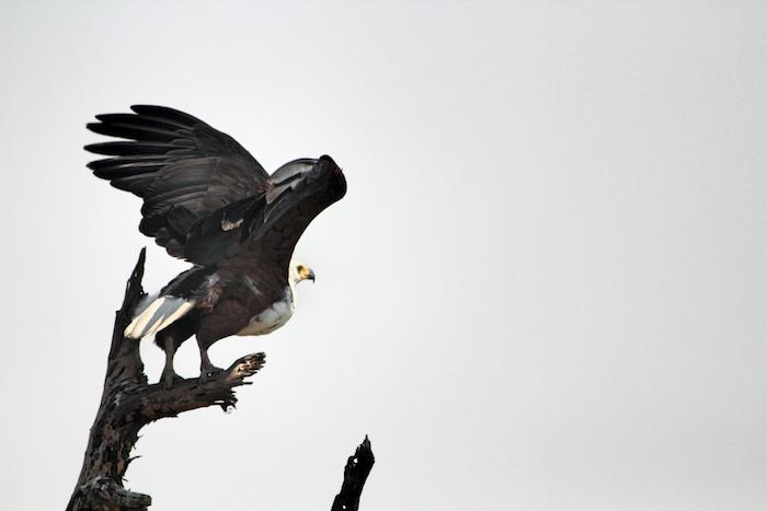 bird-takes-off