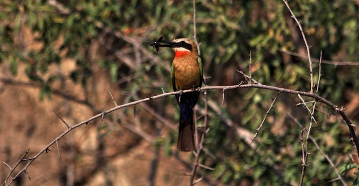 birding-botswana