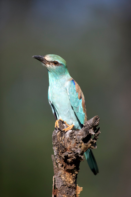 birding-kruger