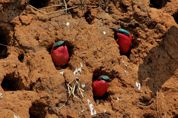 birds-in-holes