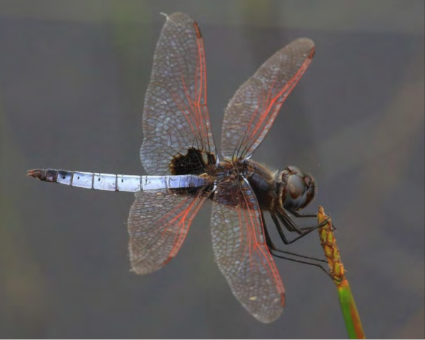 dragonfly-discovery