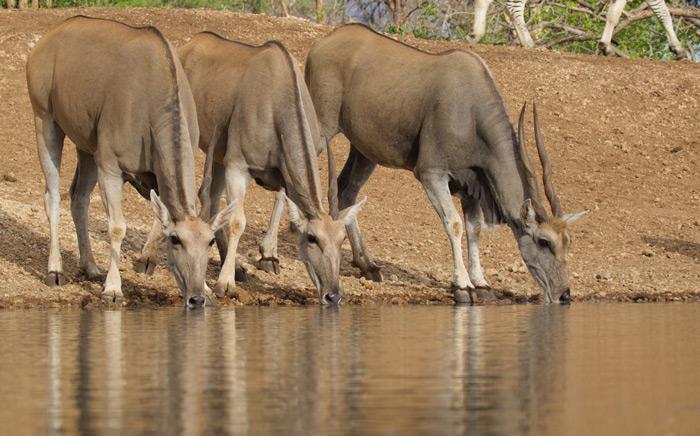 eland-waterhole