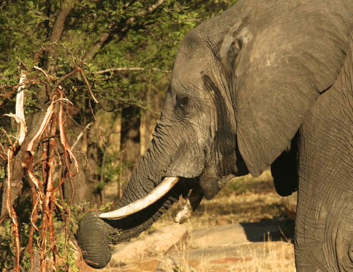 elephant-conservation-action