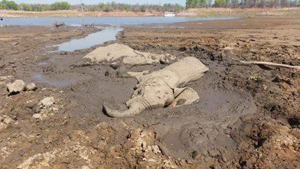 elephant-in-mud