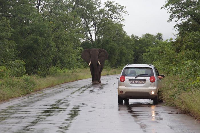 elephant-self-drive-kruger