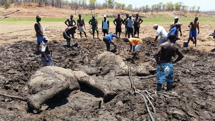 elephant-stuck-in-mud