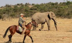 elephants-horse-riding