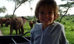elephants-ruaha-national-park