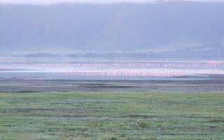 flamingos-nrorongoro-tanzania