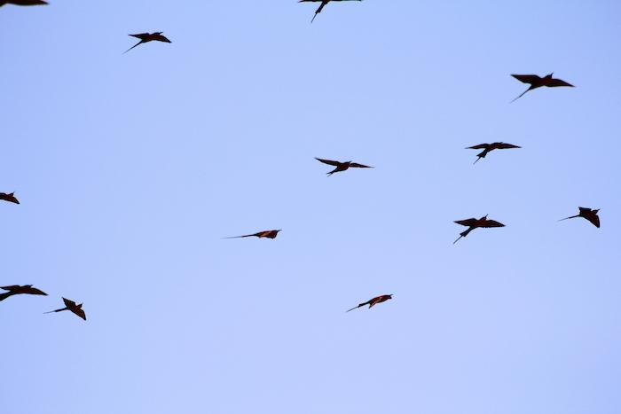 flock-of-birds-in-sky