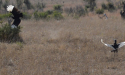 Can you spot the leopard?