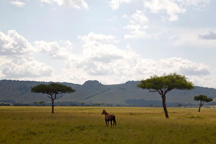 horse-maasai-mara