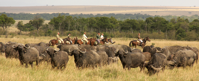 horse-riding-with-buffalo