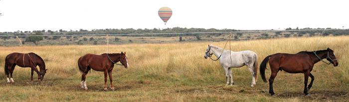 horses-offbeat-safaris-kenya
