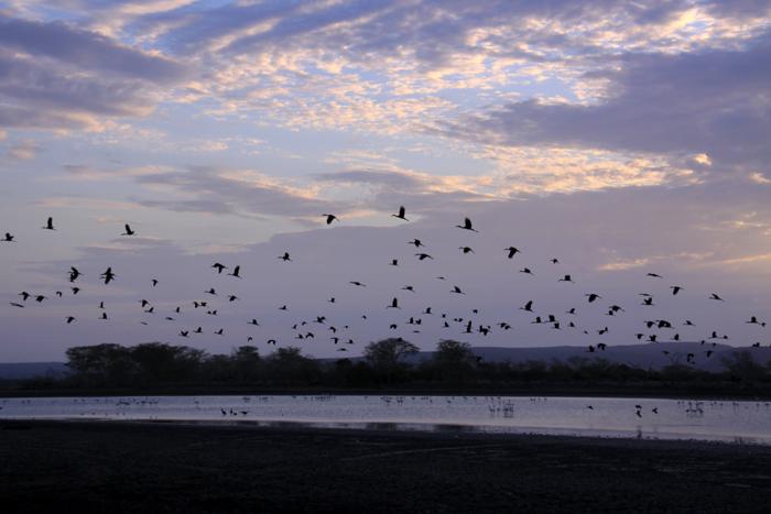 insumo-pan_panorama-with-birds