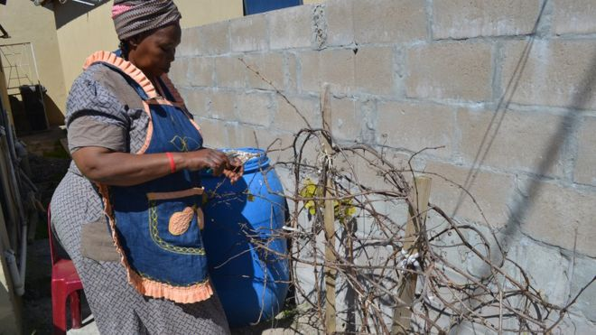 Judith Xabanisa looks after her grape vines all year round so she can get the best grape from them