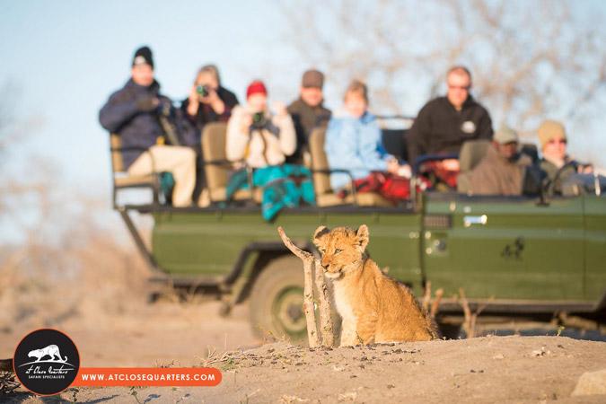 lion-cub-game-drive
