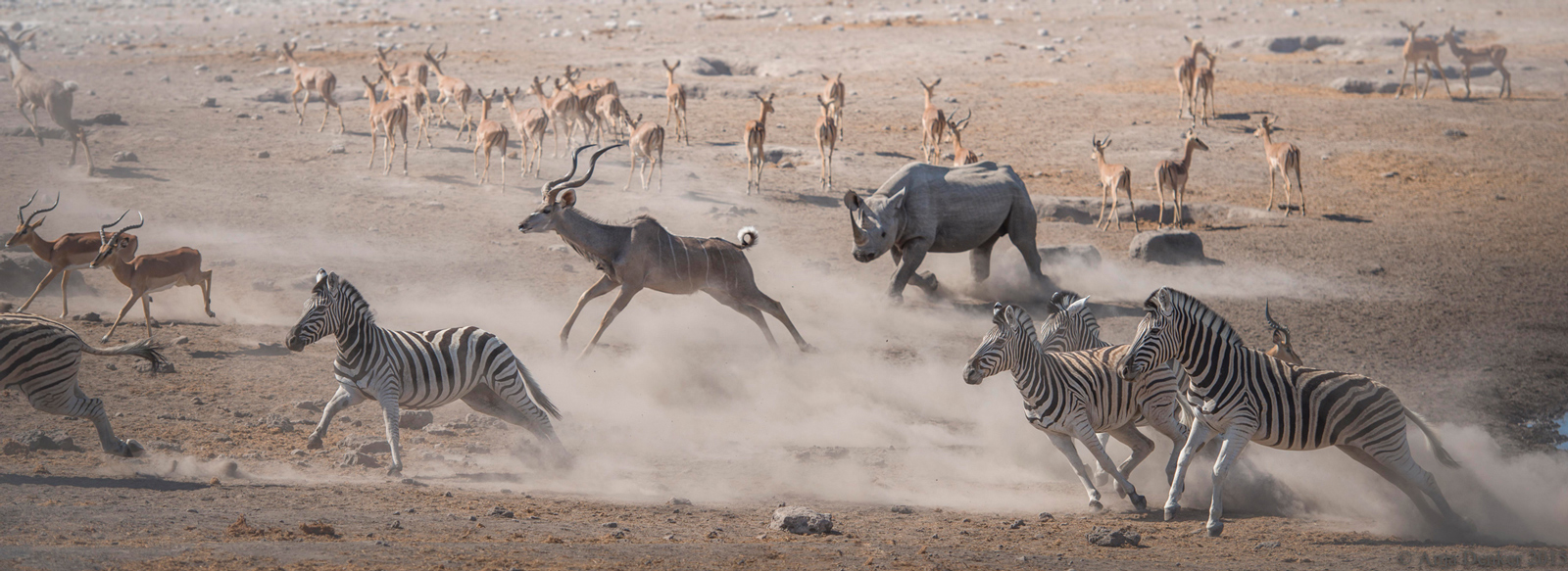 Etosha mayhem-at-the-waterhole-anja-denker