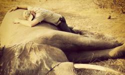 prince-harry-elephant