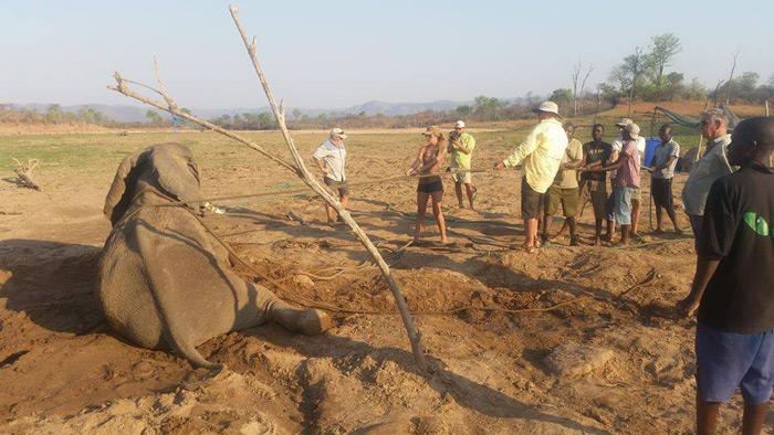 pulling-elephant-upright