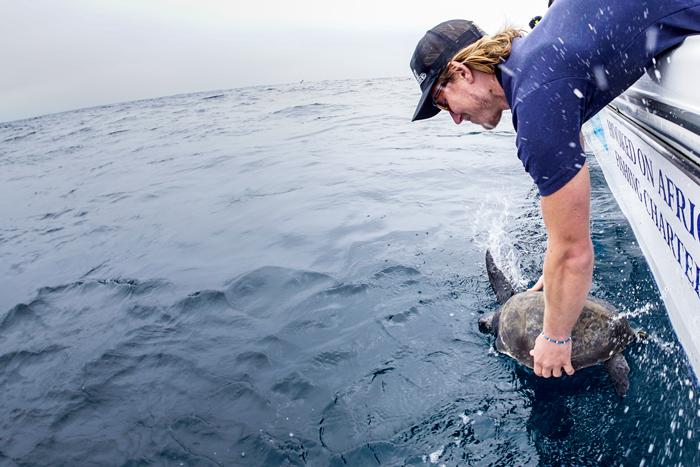 releasing-sea-turtle