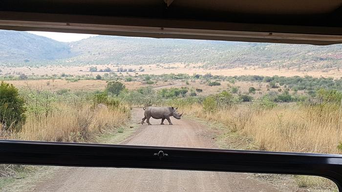 rhino-game-vehicle