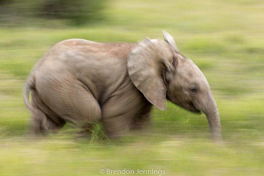 sabi-sand-elephant