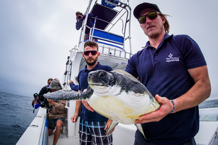 sea-turtle-ready-for-release