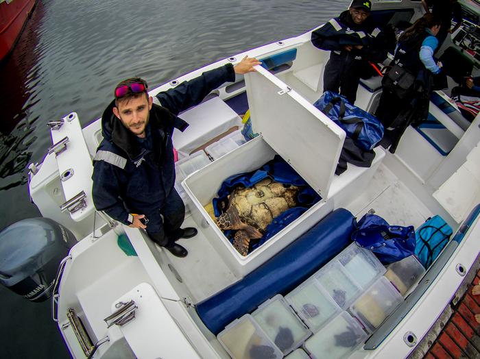 sea-turtle-release-box