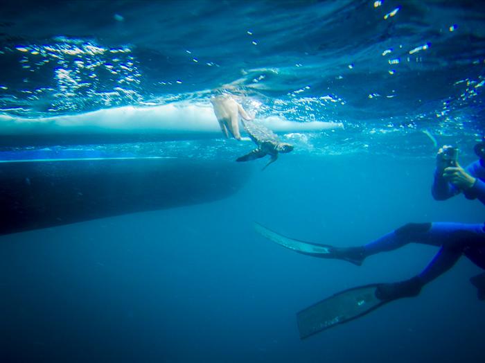 sea-turtle-release-underwater
