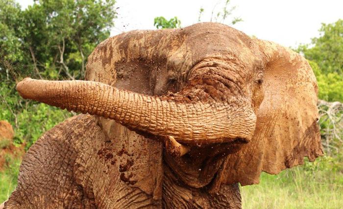 sosian-lodge-laikipia-elephant-sean-outrum