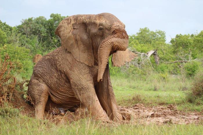 sosian-lodge-laikipia-sean-outrum-elephant-bath