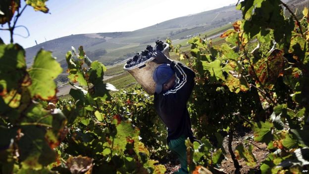 South Africa's wine industry is world-acclaimed