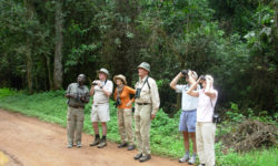 Budongo, Uganda birding with Africa Geographic