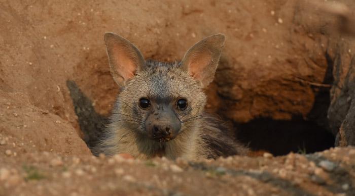 ©Freddie Flyer, a guest at Tuli Safari Lodge