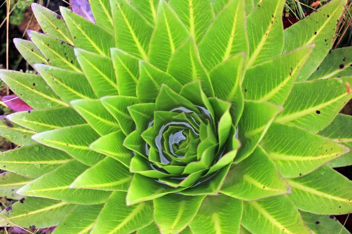 aberdare-flora