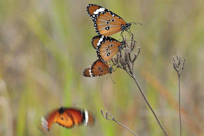 african-monarchs