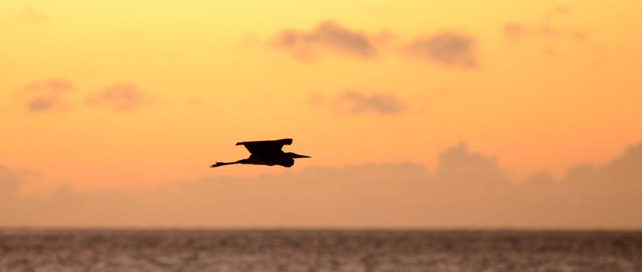 bird-at-sunset-kisiwa-on-the-beach