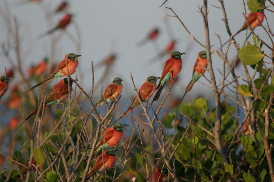 birdlife-manda-bay