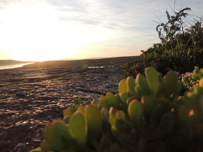 Be inspired by local landscapes when planning your indigenous garden. Succulent vygies and wild rosemary (Eriocephalus) form a natural rock garden in the West Coast National Park.