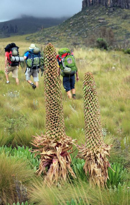 climbing-aberdare-kenya