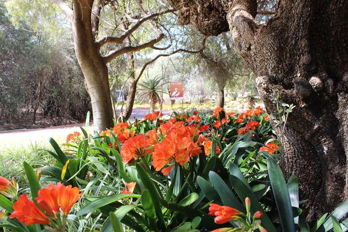 Why You Should Visit The Free State National Botanical